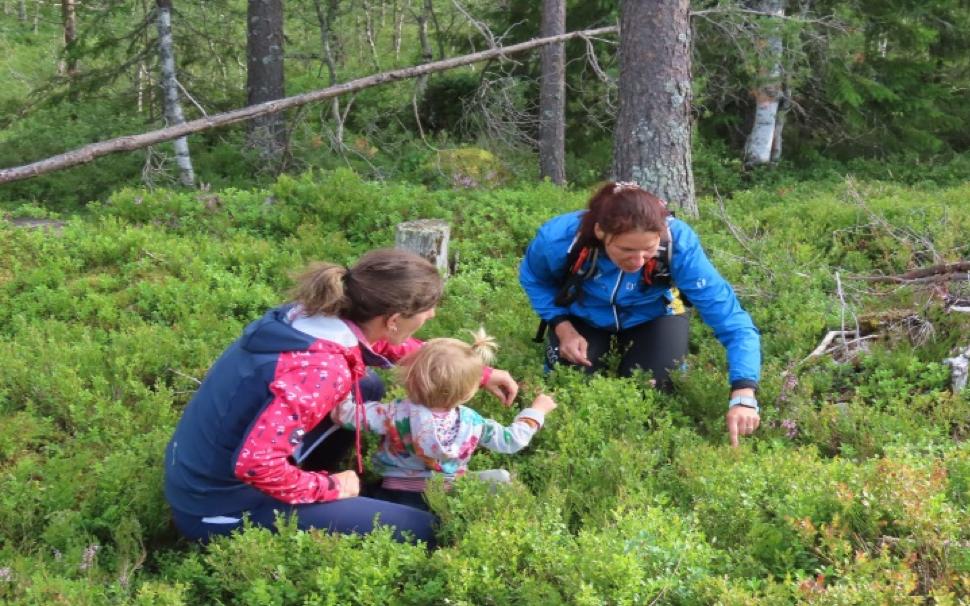 Ojura va en Norvège 2019 : myrtilles pour tous